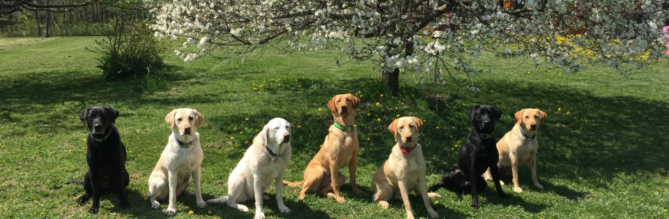 Cooperstown Kennels - Home